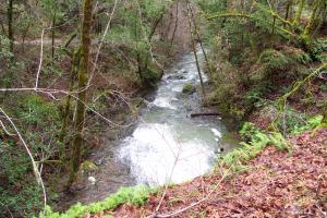 San Geronimo Creek, Marin County, CA