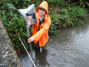PWA hydrologist Todd Kraemer, gaging flow in Campbell Creek