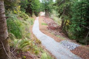 Former abandoned logging road converted to a public access trail in the Headwaters Forest Reserve