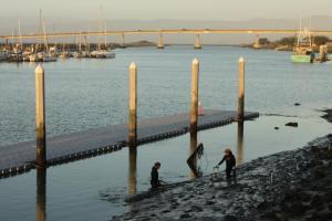 Eelgrass surveys for the Humboldt State University Aquatic Center floating dock