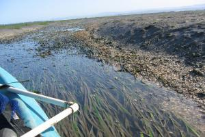 Predicted eelgrass response to sea level rise and implications for foraging Black Brant