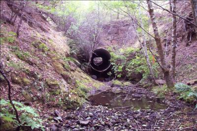 Before: Looking upstream at the perched culvert outlet . The culvert was a barrier to fish migration.