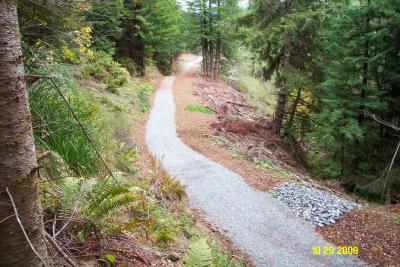 After: Former abandoned logging road converted to trail for public access in the Headwaters Forest Reserve.