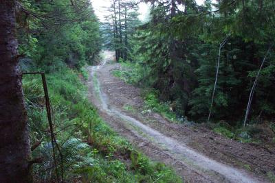 Before: Abandoned logging road in the Headwaters Forest Reserve, Humboldt County, CA. The road has been brushed in preparation.